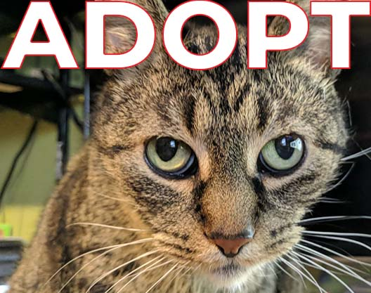 Adopt image with cat face